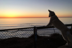 This photo of Maya watching the surf was featured in our very first edition one year ago.
